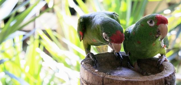 At the Amigos de las Aves bird rescue center
